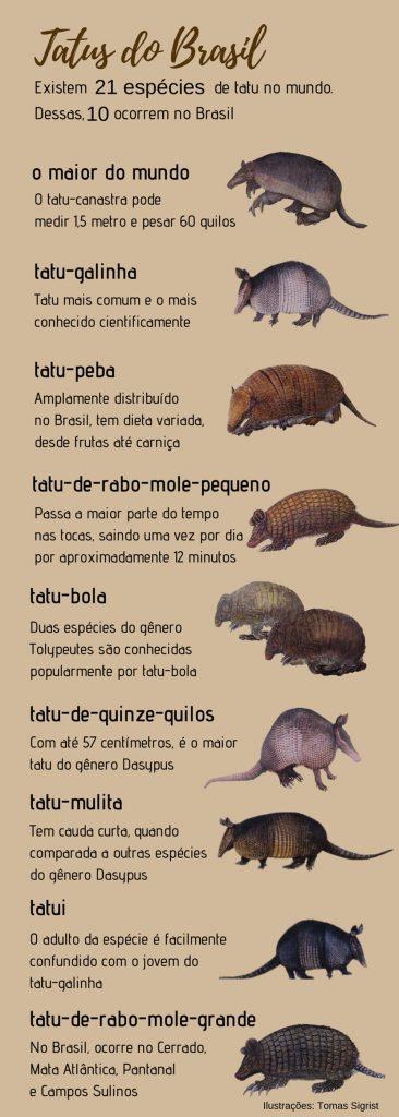 tatus brasileiros