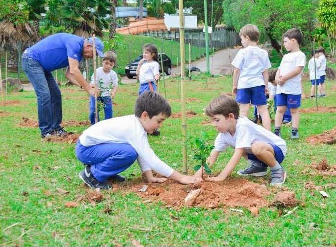plantio de árvore